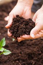 植物と土壌pHの関係